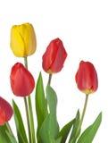 Tulpe-Blumenstrauß lizenzfreie stockfotografie