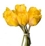 Tulpe-Blumenstrauß Stockbild
