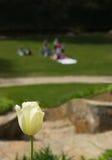 Tulpe an einem Park Stockfoto