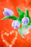 Tulpe-Frühlingsblume auf Rot und Funkeln Lizenzfreie Stockbilder