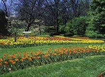 Tulpe-Garten stockbilder