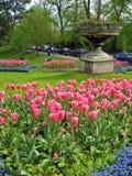 Tulpe-Garten Stockfoto