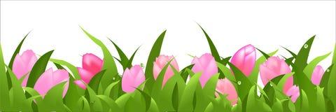 Tulpe-Panorama Lizenzfreie Stockfotografie