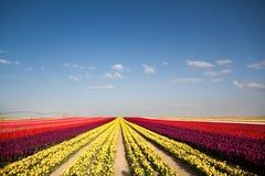 Tulpe Schöner Blumenstrauß der Tulpen Bunte Tulpen Tulpen im sTulip Schöner Blumenstrauß der Tulpen Bunte Tulpen Lizenzfreie Stockbilder
