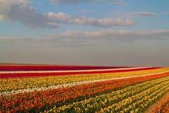 Tulpe Schöner Blumenstrauß der Tulpen Bunte Tulpen Tulpen im sTulip Schöner Blumenstrauß der Tulpen Bunte Tulpen Lizenzfreies Stockbild
