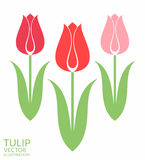 Tulpe set stock abbildung