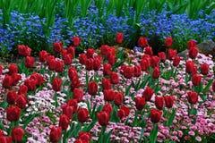 Tulpe- und Gänseblümchenmuster stockbilder