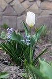 Tulpe und Hyazinthe lizenzfreie stockfotografie