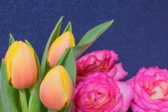 Tulpe und stieg Stockfoto