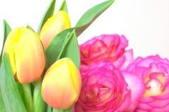 Tulpe und stieg Stockfotografie