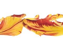 Tulpeblumenblätter Stockfotos
