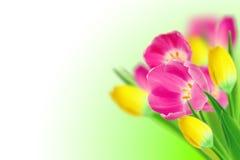 Tulpeblumenstrauß Stockfotografie