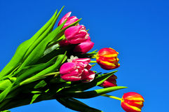 Tulpeblumenstraußfrühling Ostern Stockbilder