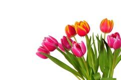 Tulpeblumenstraußfrühling Ostern Lizenzfreies Stockbild