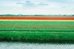 Tulpefeld, Holland Bunte Blumen im Frühjahr stockfoto