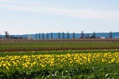 Tulpefeld mit verschiedenen Farbtulpen Lizenzfreie Stockfotos
