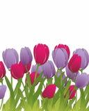 Tulpen Lizenzfreie Abbildung