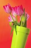 Tulpen 4 van de lente Royalty-vrije Stock Afbeeldingen