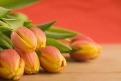 Tulpen Lizenzfreies Stockbild