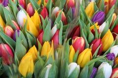 Tulpen Lizenzfreies Stockfoto