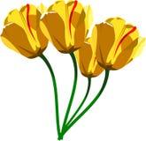 Tulpen stock illustratie
