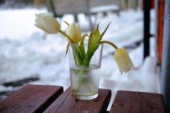 Tulpen Stock Afbeelding