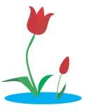 Tulpen. Lizenzfreie Stockbilder