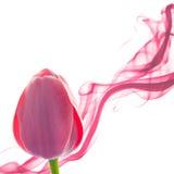 Tulpen abstracte achtergrond met ontwerpelement op wit Stock Foto