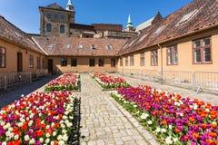 Tulpen in Akershus-Festung Stockfotografie