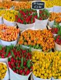 Tulpen in Amsterdam Royalty-vrije Stock Foto