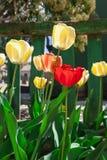 Tulpen auf dem Sun Stockbild