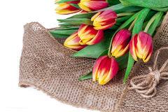 Tulpen auf einer Leinwand Stockfotos