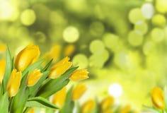 Tulpen auf Unschärfenhintergrund Stockbild