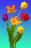 Tulpen auf Weiß Stockfoto