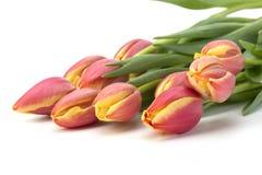 Tulpen auf weißem Hintergrund Lizenzfreie Stockfotos