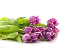 Tulpen auf weißem Hintergrund Farben der Frühlingsschönheit Lizenzfreies Stockbild