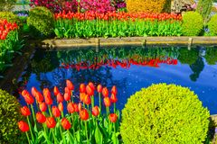 Tulpen bei Tulip Farm North von Seattle Stockfoto