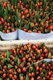Tulpen beim Bloemenmarkt (Blumen-Markt) Amsterdam Lizenzfreies Stockbild