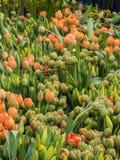 Tulpen bij een bloemmarkt Stock Foto
