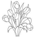 Tulpen, bloemen, sier zwart-witte kleurende pagina's Stock Afbeeldingen