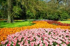 Tulpen in de lentetuin royalty-vrije stock afbeeldingen