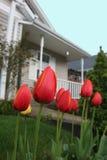 Tulpen in de voorsteden Stock Foto's