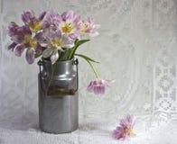Tulpen in der alten Milch-Dose Lizenzfreies Stockbild