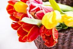 Tulpen in der Korbnahaufnahme Stockfotografie