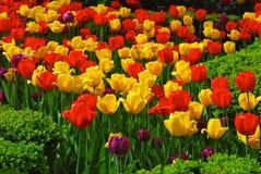 Tulpen in der Mitte der Stadt Lizenzfreies Stockbild