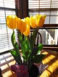 Tulpen in der Sonne Lizenzfreie Stockfotografie