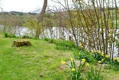Tulpen, die durch einen Fluss im Frühjahr läuft durch die Landschaft blühen Stockfotografie