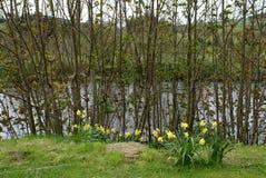 Tulpen, die durch einen Fluss im Frühjahr läuft durch die Landschaft blühen Stockfotos