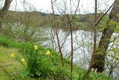 Tulpen, die durch einen Fluss im Frühjahr läuft durch die Landschaft blühen Lizenzfreie Stockfotografie