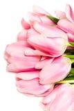 Tulpen die op wit worden geïsoleerdn Stock Foto